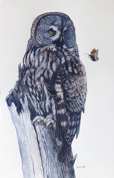 Lappuggla, akvarell