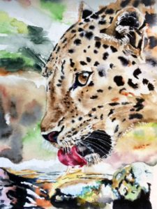 Törstig leopard, akvarell av Ewa Helzén