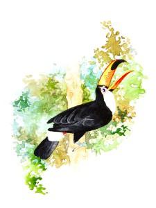 Tukan i akvarell